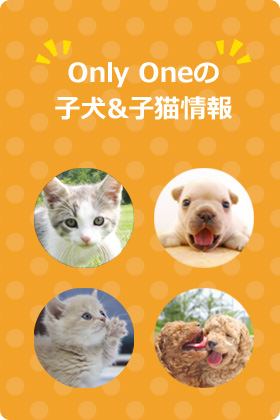Onlyワンの仔犬&子猫情報